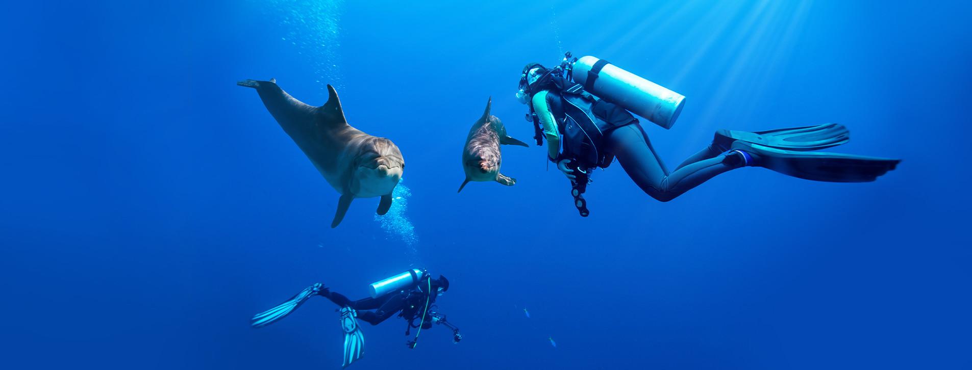 Фото - Дайвінг із дельфінами для двох