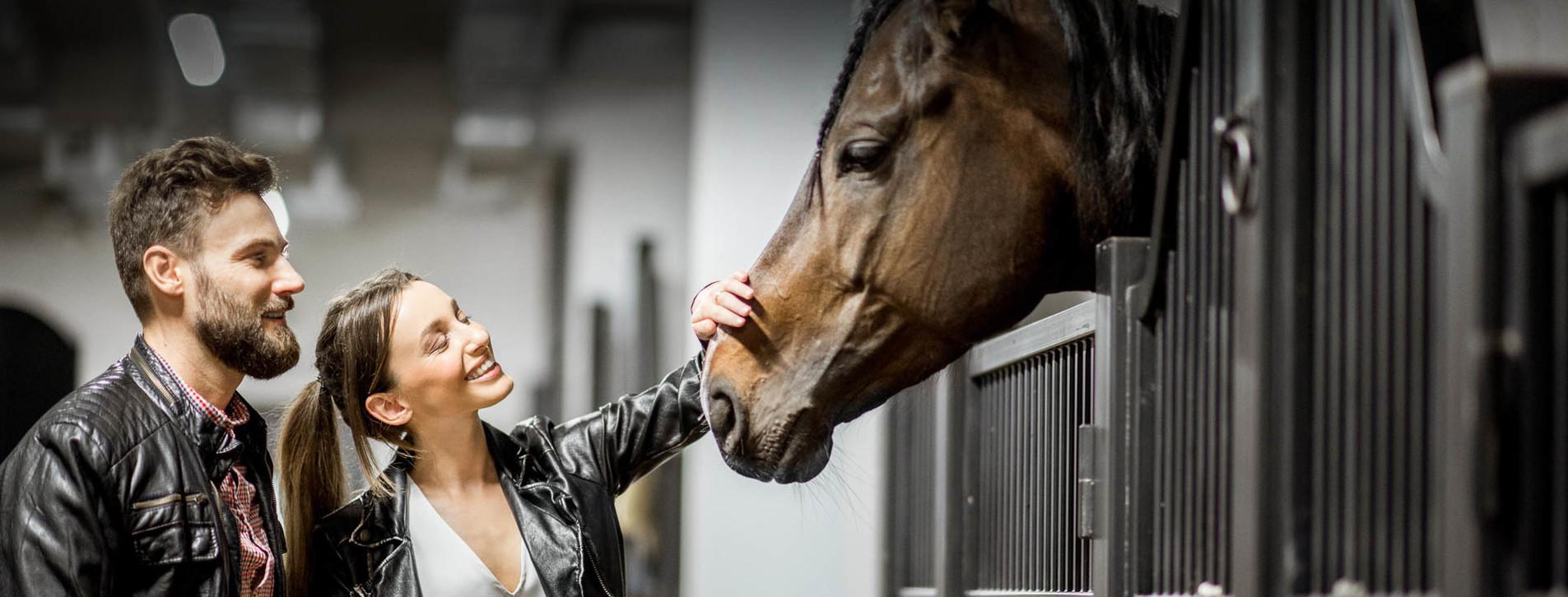 Фото - Экскурсия на конюшню для двоих