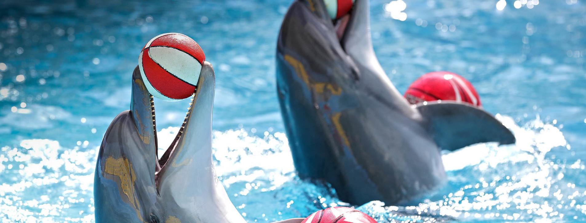 Фото - Дельфинарий НЕМО для двоих
