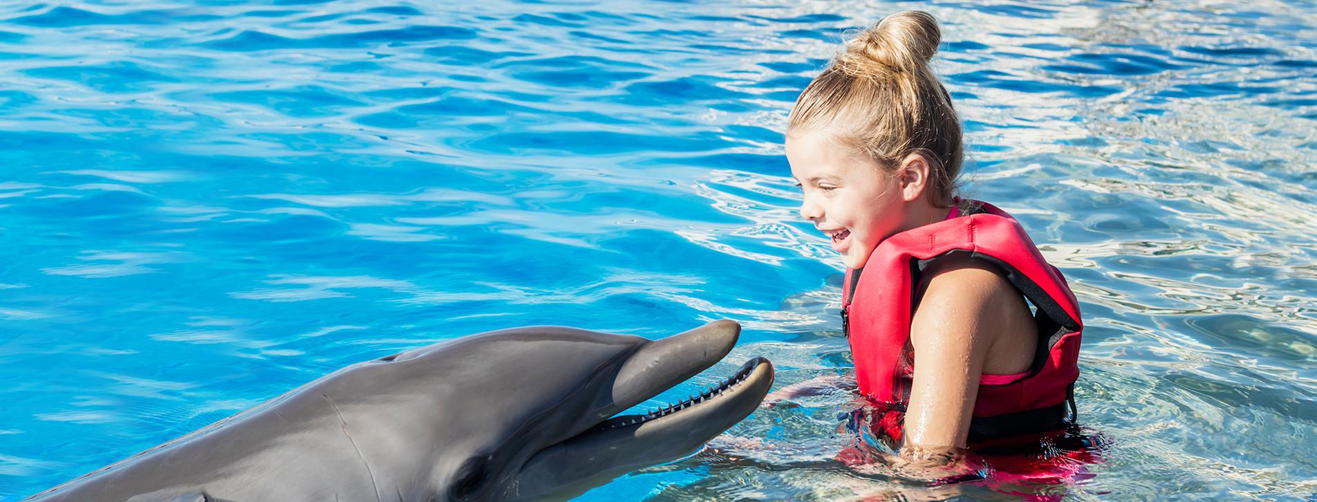 Фото - Тренування з дельфінами