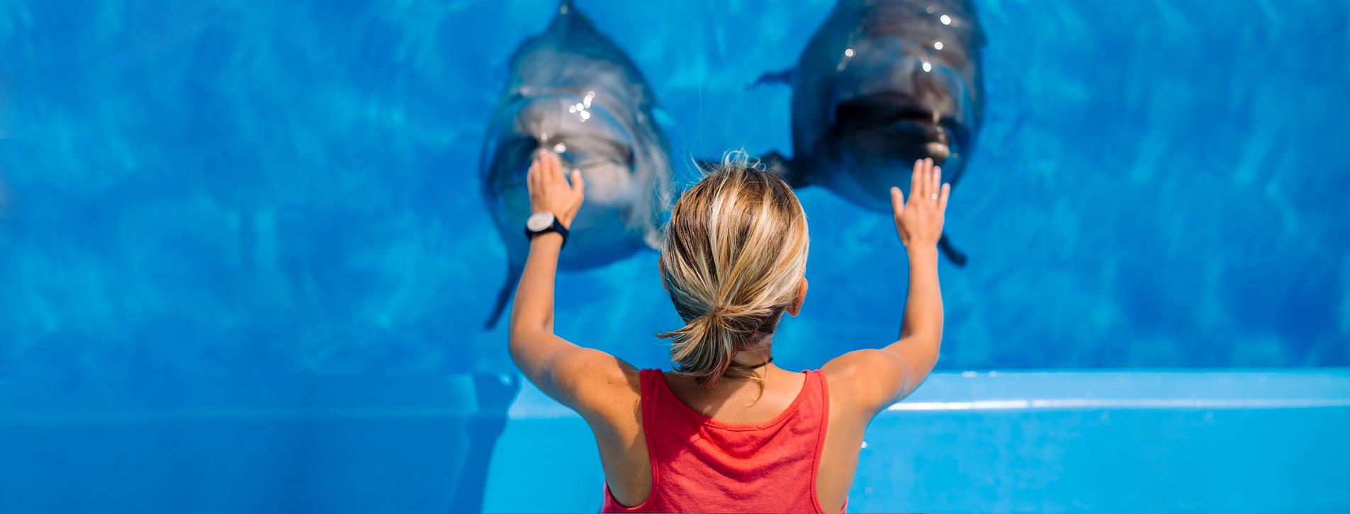 Фото - Тренировка с дельфинами для двоих
